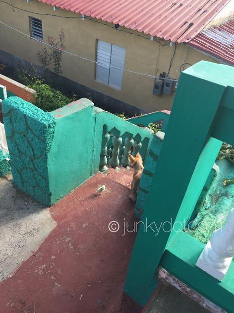 Casa Bule y Yamedis | Vinales | Cuba